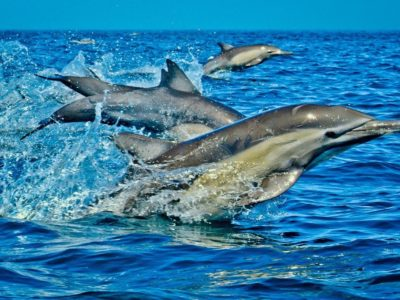 Photo of JETSKI DOLPHINS 🐬 WATCHING WASINI ISLAND