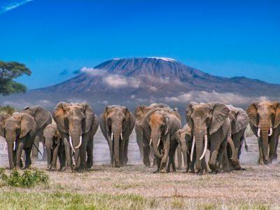 Photo of 4 Days Safari – Tsavo East, Amboseli & Taita Hills
