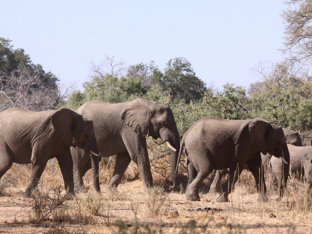 Mwaluganje Elephant Sanctuary