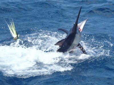 Photo of DEEP SEA FISHING 🛥️ (DREAM CATCHER) – 10HRS