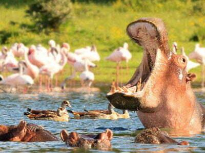 Photo of 7 days – Tsavo-Amboseli-Lake Naivasha-Maasai Mara