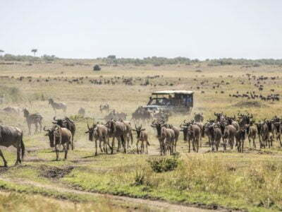 Photo of 7 days – Samburu – Lake Nakuru – Maasai Mara