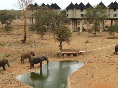 Photo of 2 Days Ngutuni/Salt Lick Safari
